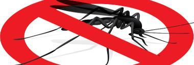 Zanzare zanzara fotolia 50040531 380 ant