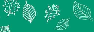 Piano foglie 380 ant